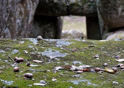 escursioni archeo-naturalistiche8
